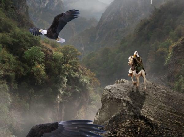 duplicate eagle 1