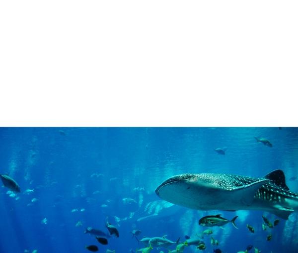 adding underwater