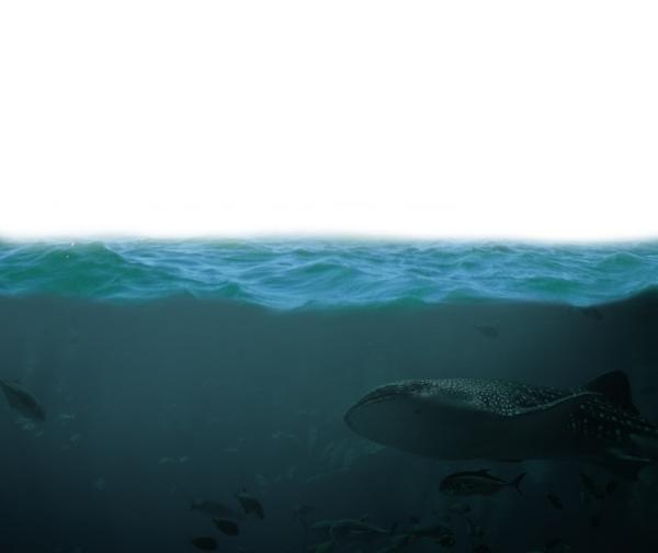 sea masking