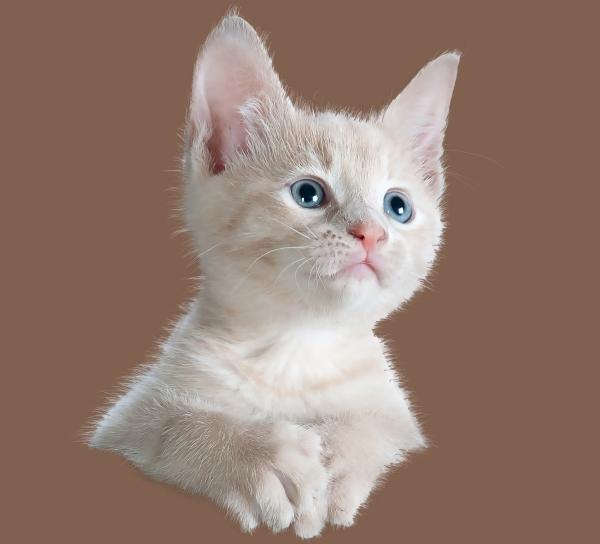 cat fur painting