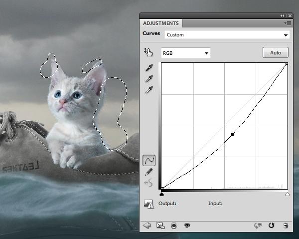 cat curves