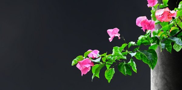 add flowers 2