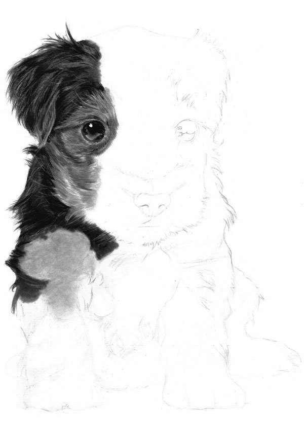 Continue working down the left side of the puppy moving onto the forelegs
