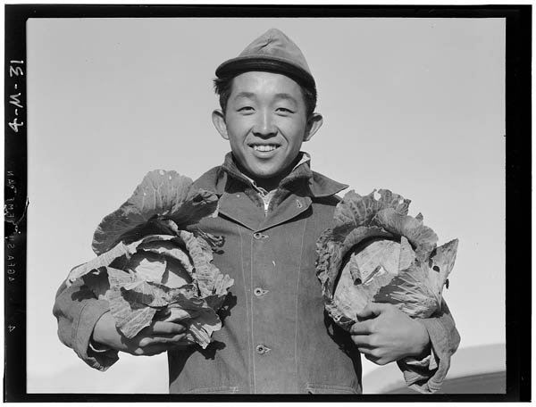 farmer with cabbages