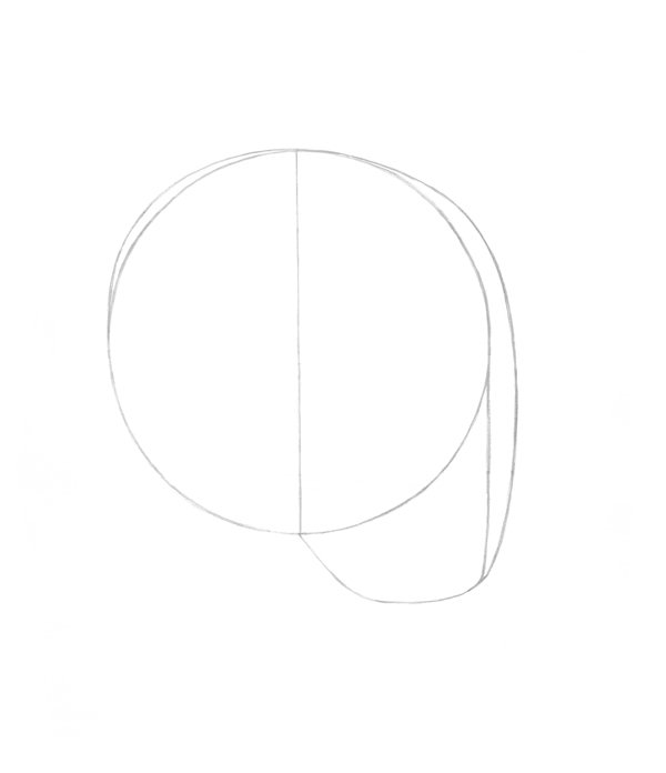 Drawing initial shape for the head