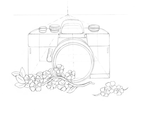 Drawing petals and leaves