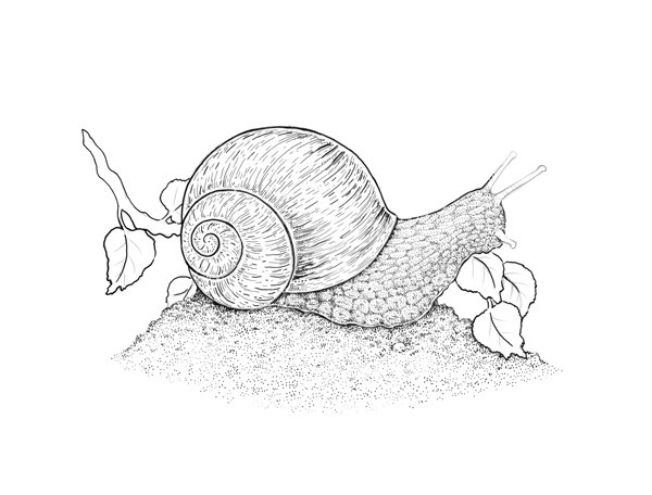Completing the texture of the snails body