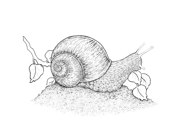 Creating volume of the shell