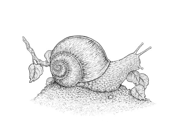 Adding small details to the snail