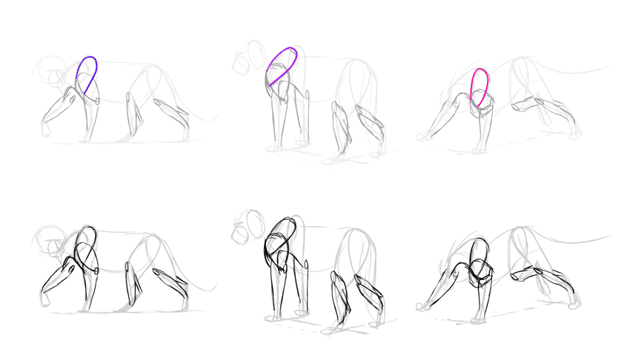 how to draw lion shoulder