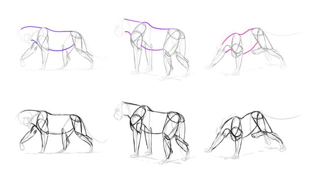 how to draw lion body