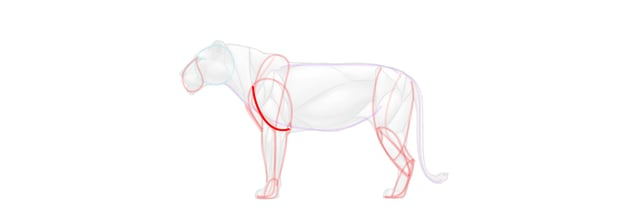 lion triceps simplified