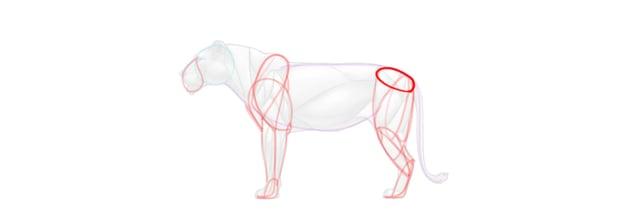 lion hip simplified