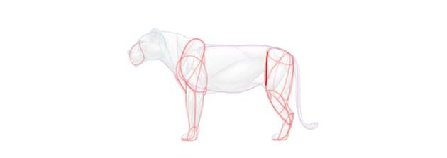 lion leg muscular simplified