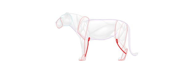 lion knee elbow simplified