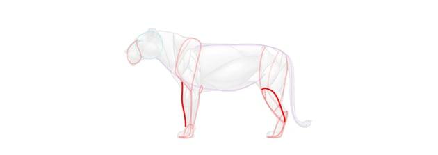 lion limbs simplified