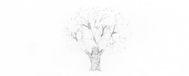 how to draw oak bark