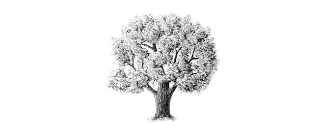 how to draw oak tree with pencils