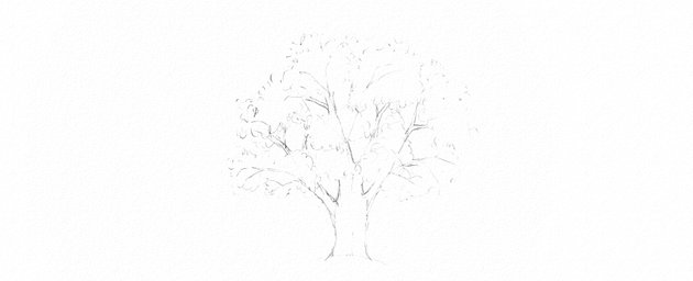 how to draw oak leaves