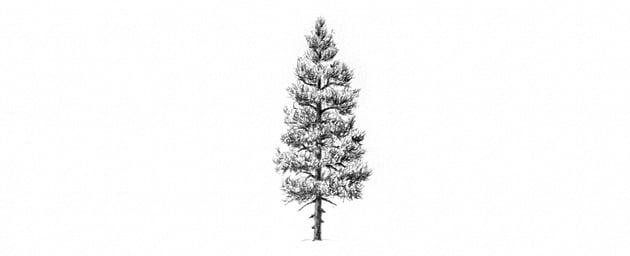 how to shade needles of pine tree