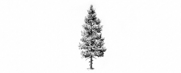 how to draw a pine tree with pencils