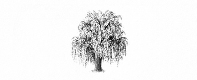 how to draw a weeping willow tree with pencils
