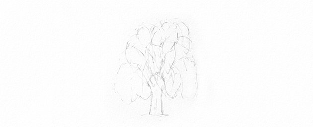 how to plan weeping willow leaves