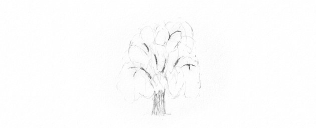 how to plan shading weeping willow trunk