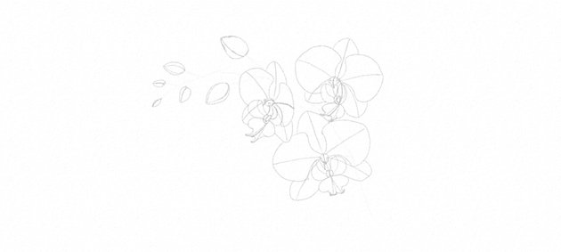 draw orchid buds