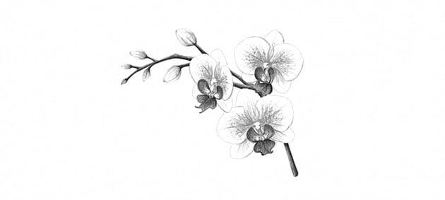 how to darken orchid pattern