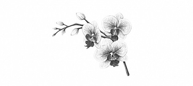 how to draw simple orchid
