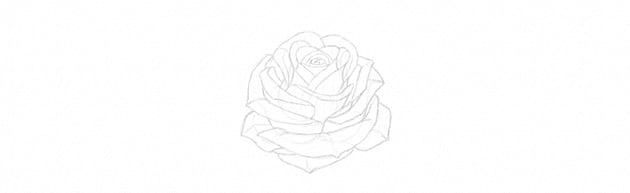how to draw rose petals