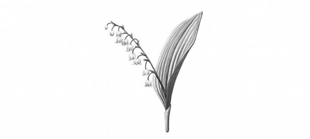 how to draw lily of the valley