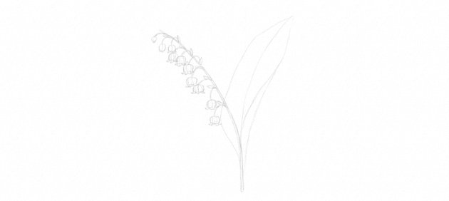 draw leaf of lily of the valley