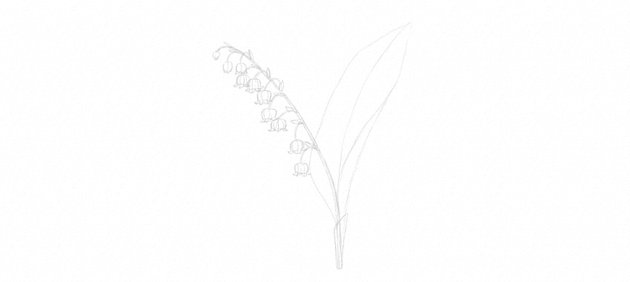 lily of the valley leaves drawing