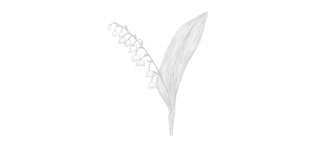 how to shade lily of the valley