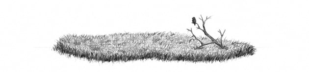 how to shade grass with soft pencils