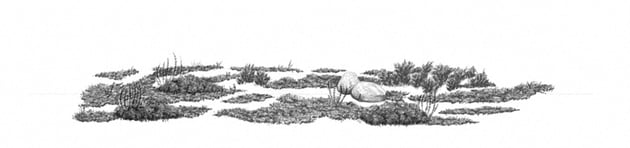 how to draw grass clusters with soft pencil
