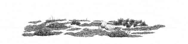 how to draw grass clusters with softest pencil