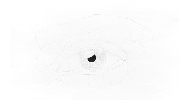 how to draw fibers in eye