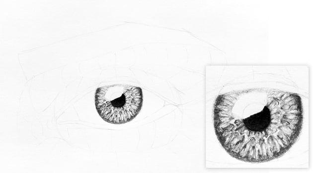 realistic iris drawing