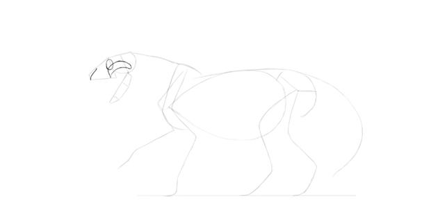 lion skull drawing