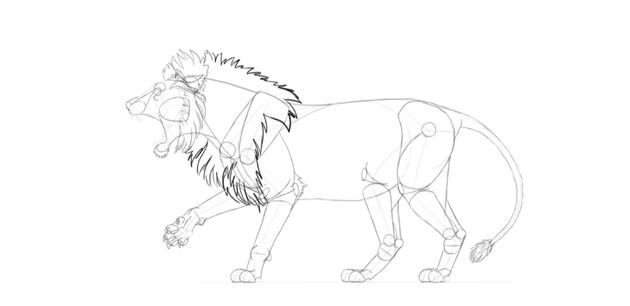 lion mane drawing