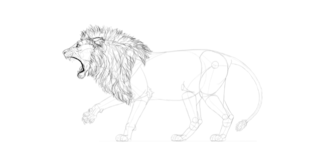 realistic lion mane drawing