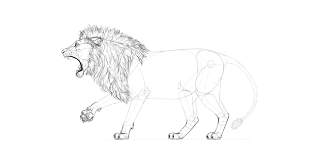realistic lion paws drawing