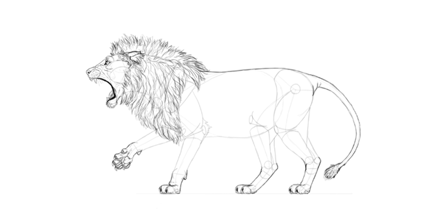 realistic lion tail drawing