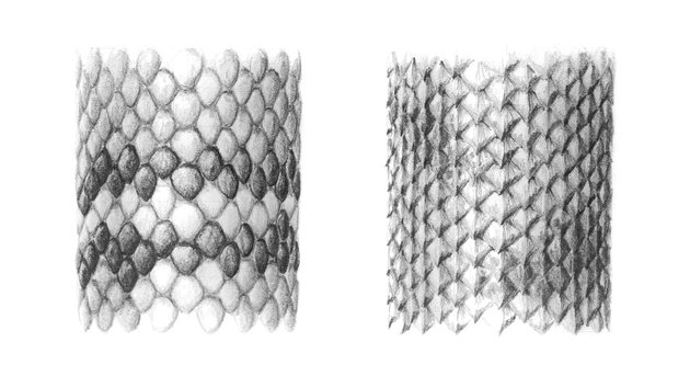 how to draw snake lizard scales
