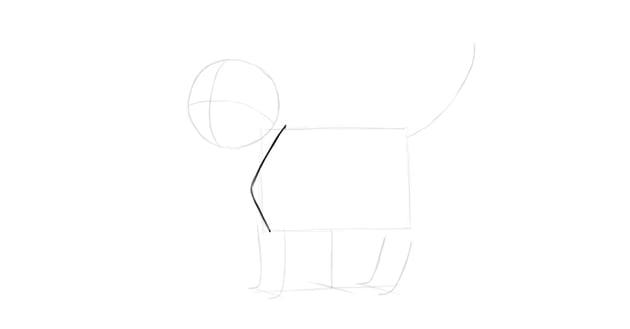 kitten shoulder