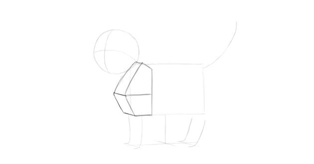 cat shoulders in perspective