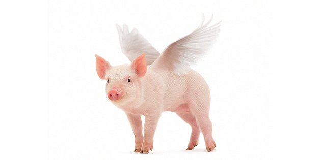 how to create winged pig in photoshop